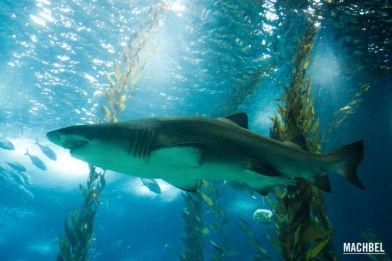 Visita al acuario u oceanário de Lisboa, Portugal