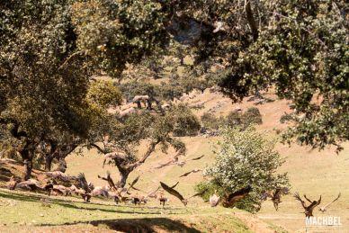 Animales de Extremadura, España