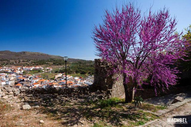 Árbol fashion Árbol morado en plena flor en el mirador del castillo de Montánchez Montánchez Extremadura 640x426 7 pueblos de Extremadura que tienes que visitar (parte I)