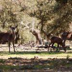 Parque Nacional de Monfragüe, Extremadura, España.