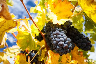 Visita y cata de vino en bodegas Hacienda Zorita, Salamanca, Castilla y León, España