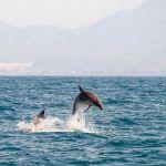 Avistamiento de cetáceos en Mar Mediterráneo, Mazarrón, Murcia