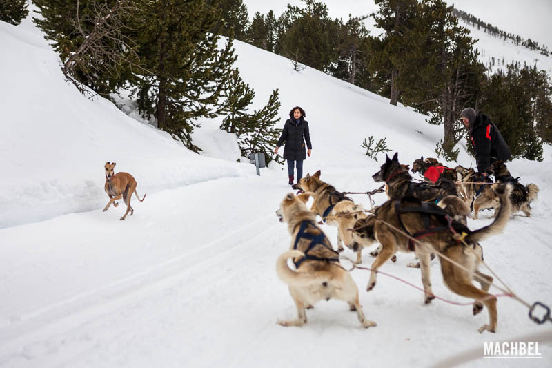 Mushing, trineo tirado por perros, en Andorra - by machbel