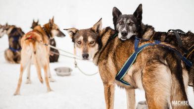 Mushing, trineo tirado por perros, en Andorra - by machbel
