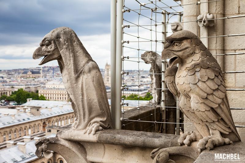 Quimeras o Gárgolas de Notre Dame, París, Francia by machbel