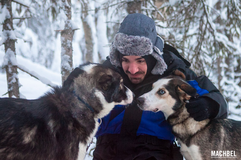 Travesía con Huskies por Laponia Finlandia by machbel