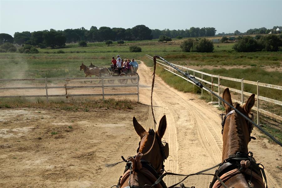 Paseo en coche de caballos por la Yeguada Ayala