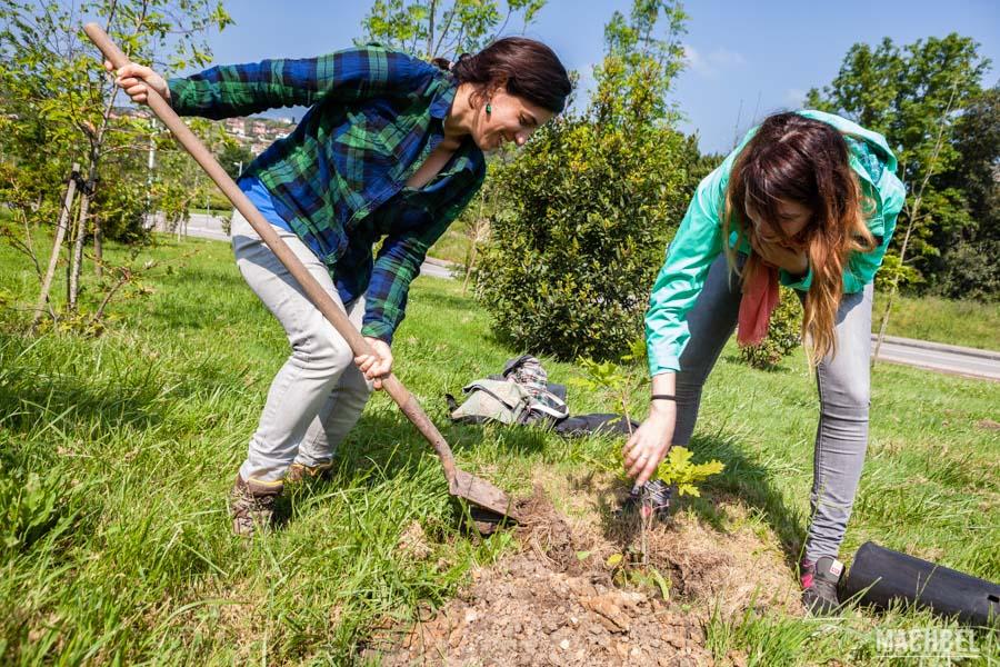 Plantando robles autóctonos