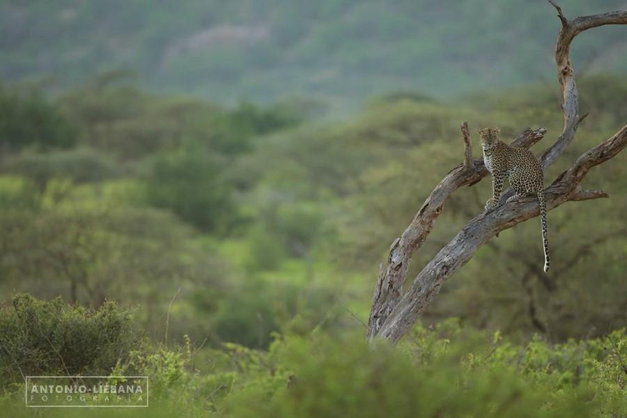 Parque Nacional de Samburu (Kenia). Por Antonio Liébana