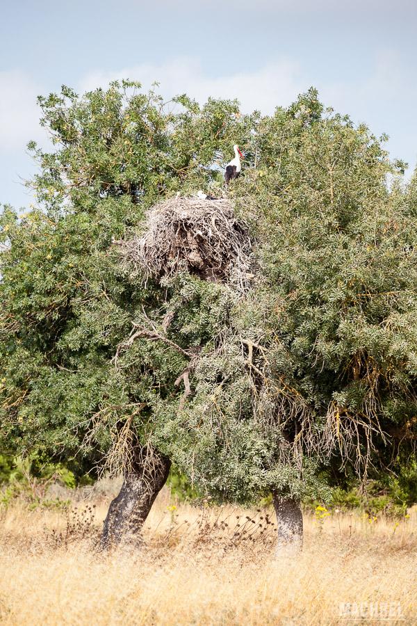 Cigüeña en Doñana