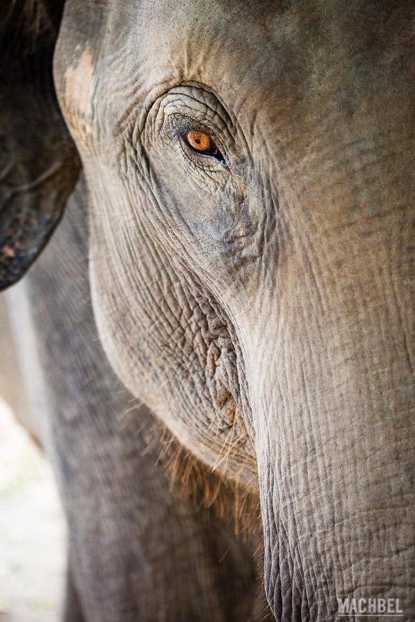 Mirada de un elefante