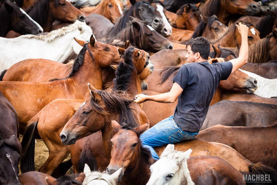 Aloitador sobre un caballo salvaje