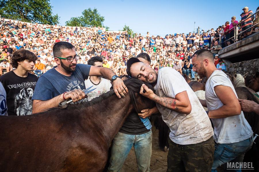 Aloitadores cortando las crines de un caballo