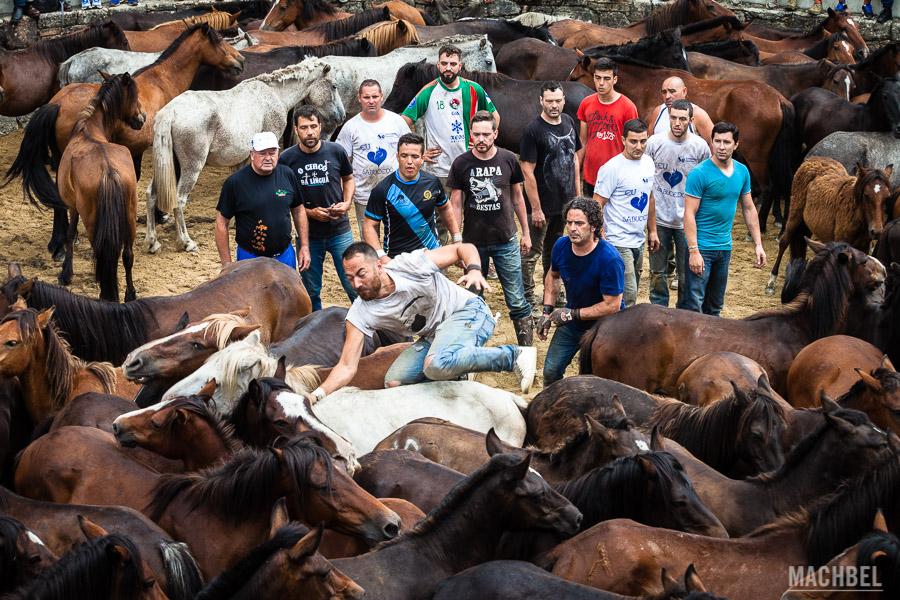 Aloitadores tratando de detener un caballo
