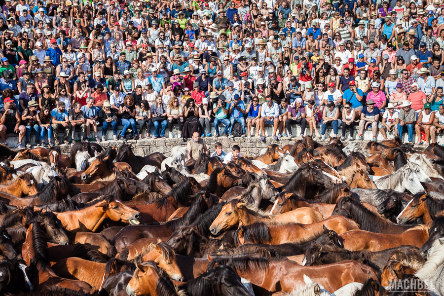 Curro con los caballos salvajes