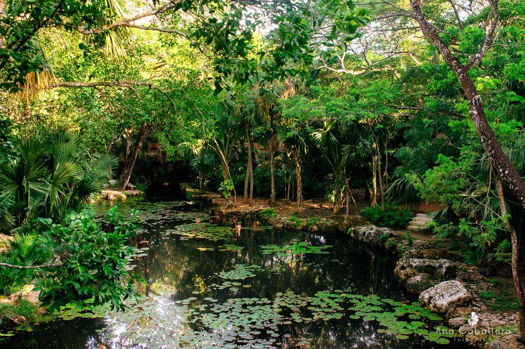 Vista del cenote sagrado desde el spa