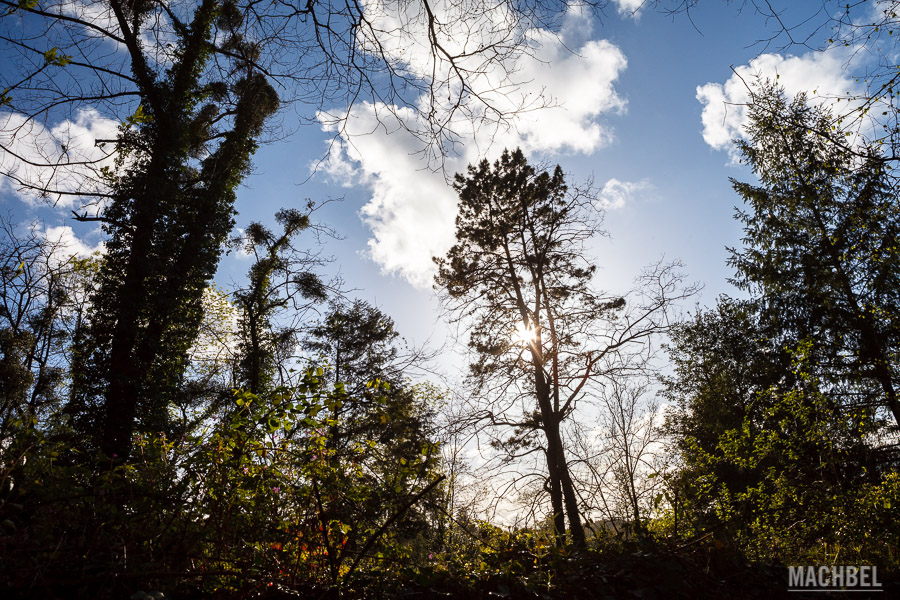 Bosque en Villaviciosa