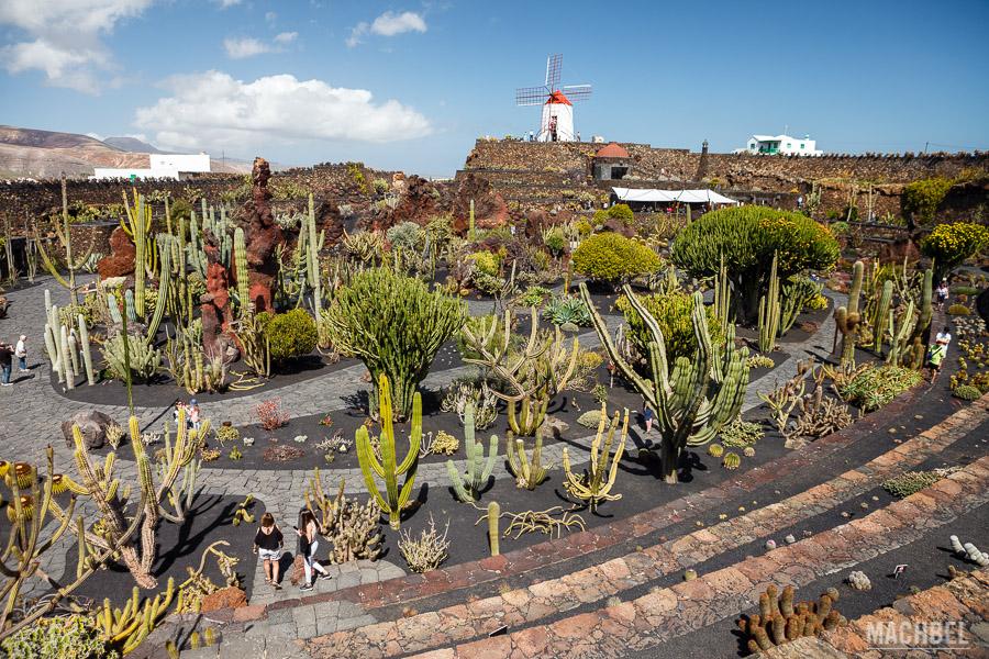 Jardín de cactus de Lanzarote y su molino