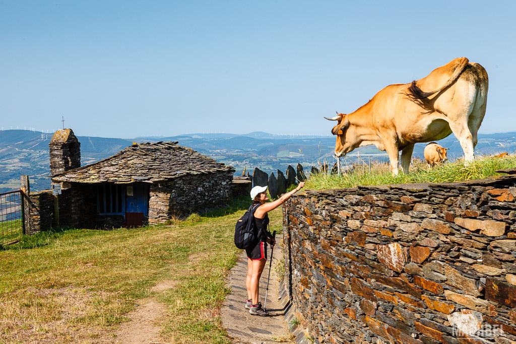 Pasando cerca de un campo con vacas