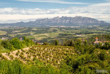 Viñedos del Penedés con la montaña de Monserrat al fondo