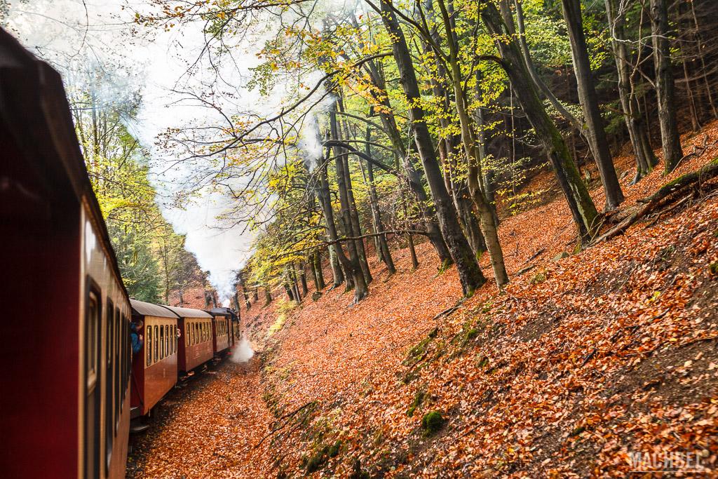 Bosques otoñales del Parque Nacional de Harz