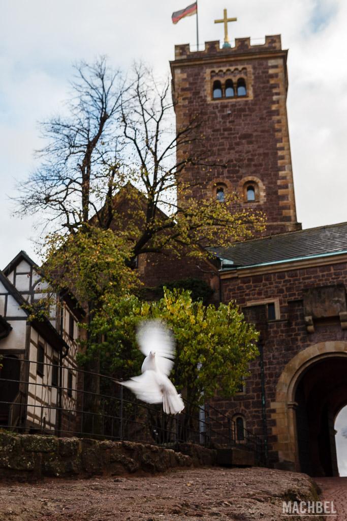 Paloma volando en el interior del Castillo de Wartburg