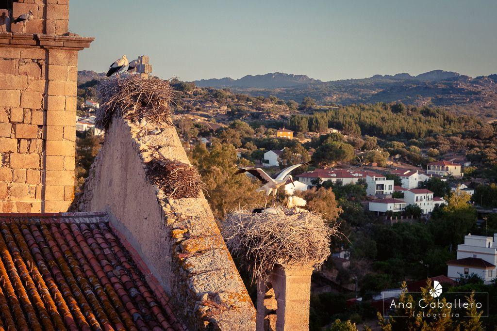 Cigüeñas desde la torre de Valencia de Alcántara