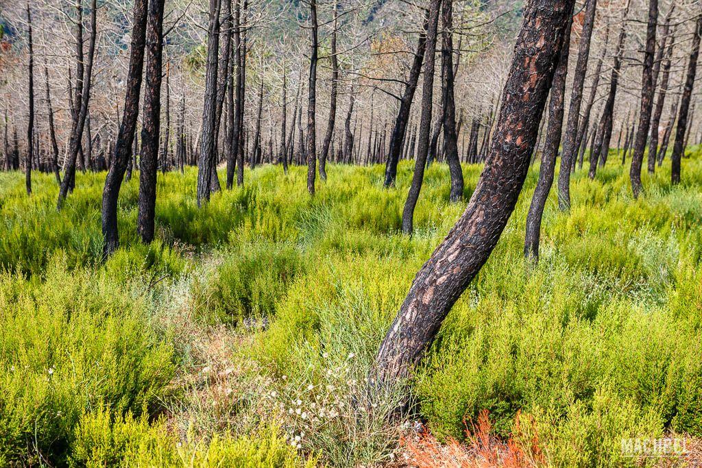 Bosque pasto de las llamas
