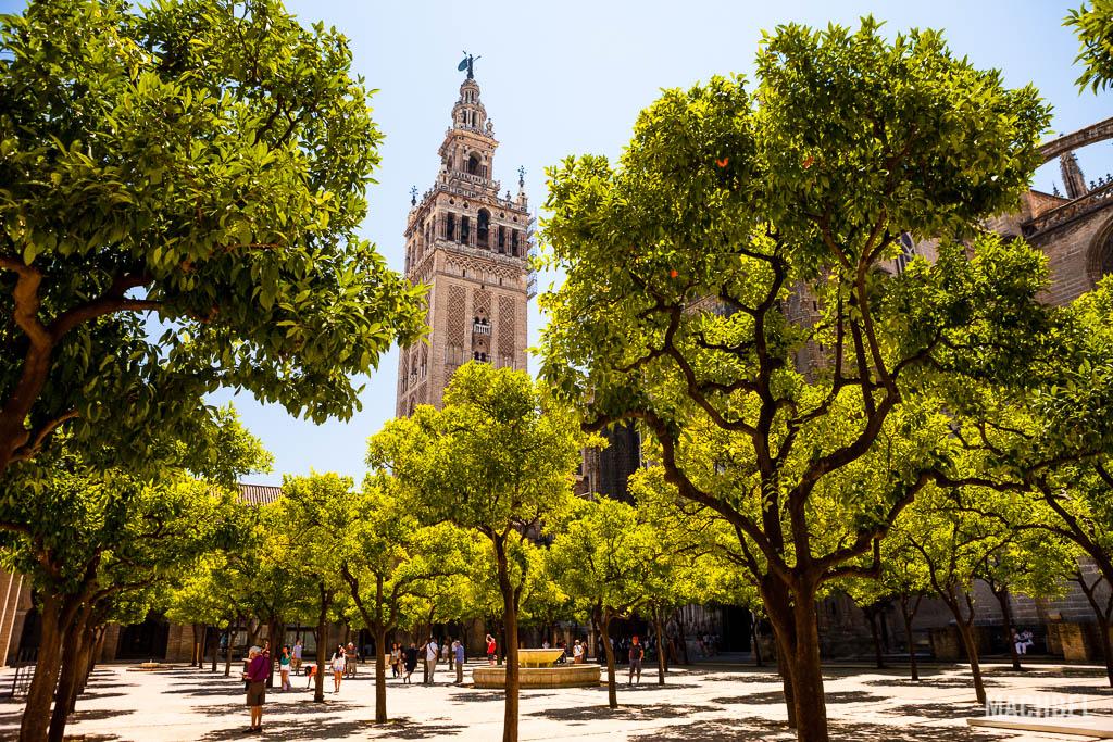 Plaza de la catedral y Giralda
