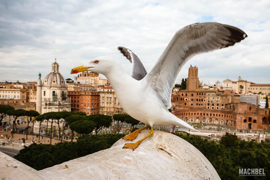 Gaviota en el Monumento a Vittorio Emanuele II