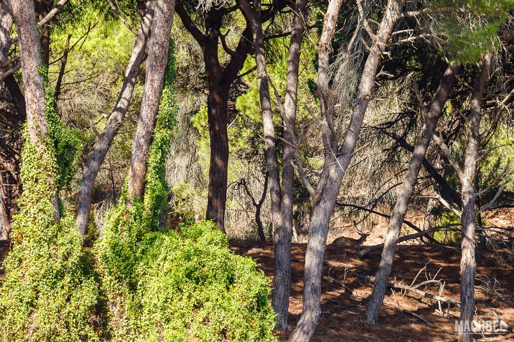 Ciervo en Parque Nacional de Doñana