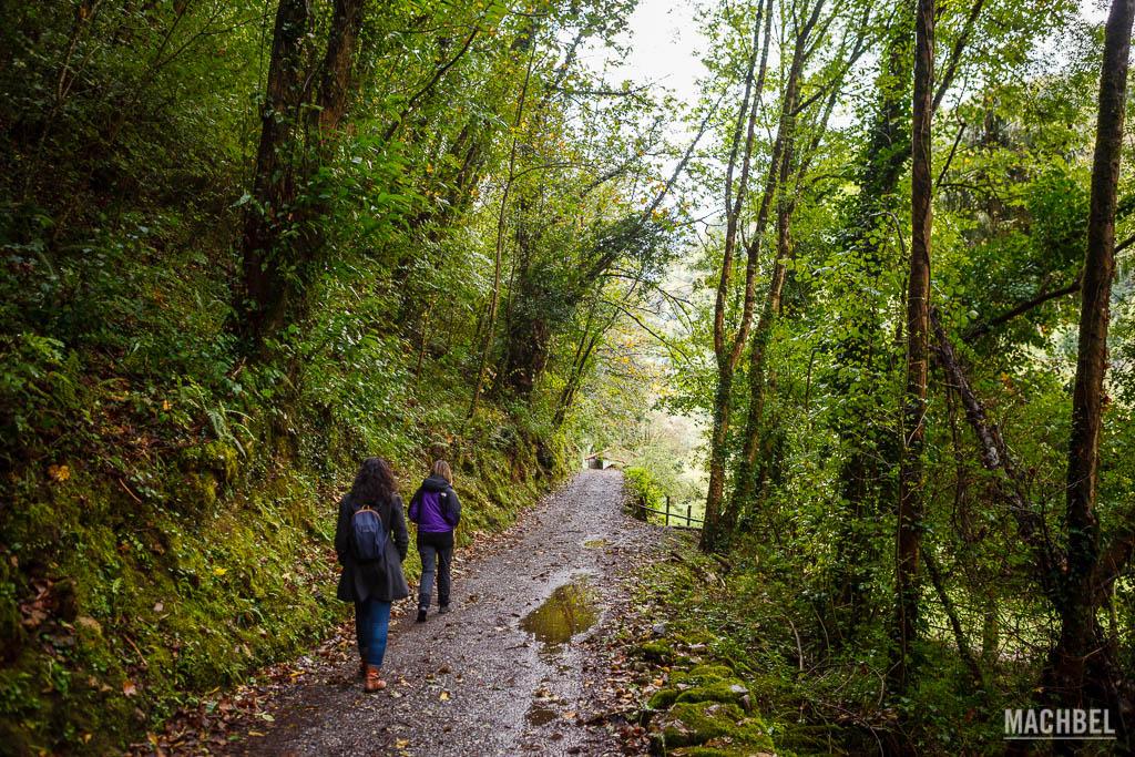 Camino por el bosque hasta el cercado del lobo