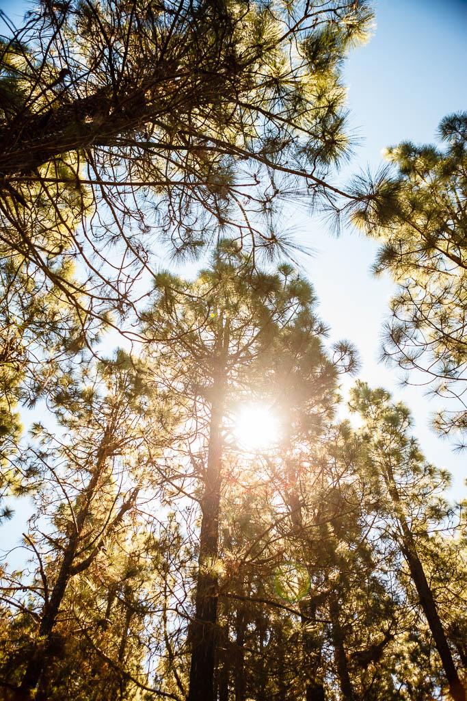 Bosque en Chinyero